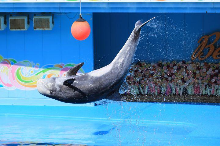 ゆったり過ごせる癒しスポット!北陸・中部のオススメ水族館ランキングTOP15