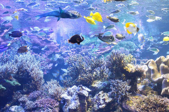青い世界が魅力的!関西で人気の水族館ランキングTOP15