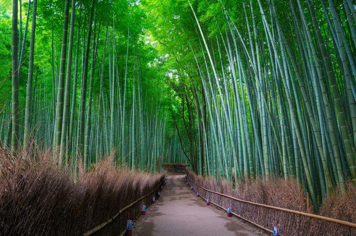 """1日で京都を満喫!絶対にはずさない""""京都1日ぶらり旅""""プランはこれがベスト"""
