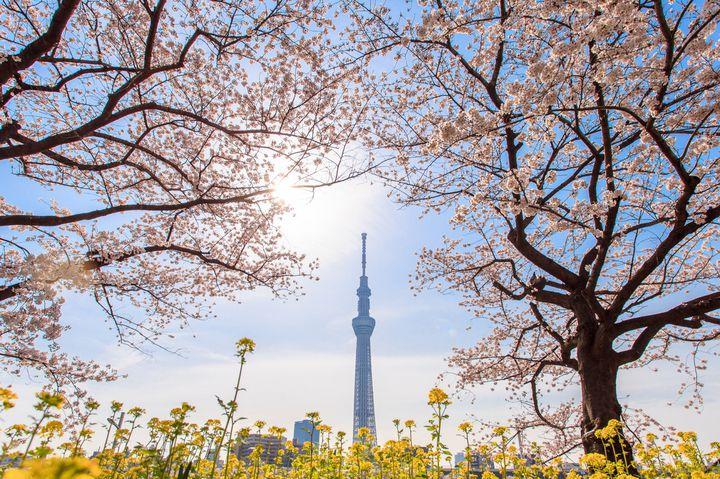 """お花見しながらピクニック!東京都内にある""""桜が綺麗な公園&庭園""""10選"""