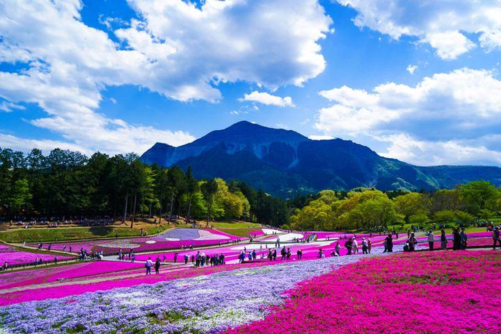 君を隣に乗せて。ドライブデートで行きたい関東地方の春を感じる観光スポット8選