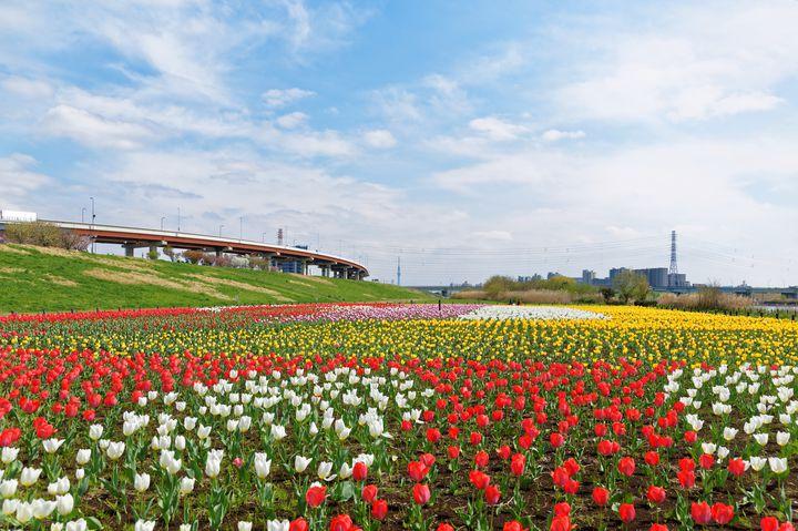 """【4月・5月】春の絶景旅に出かけよう!関東地方の""""チューリップ""""の名所8選"""