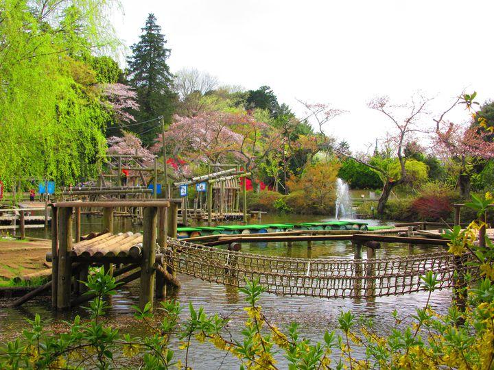 童心に戻ってはしゃごう!千葉の「清水公園」のアスレチックが楽しすぎると話題