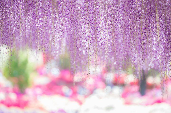 春色の風を感じるデートに。春行きたい関東近郊のドライブデートスポット7選