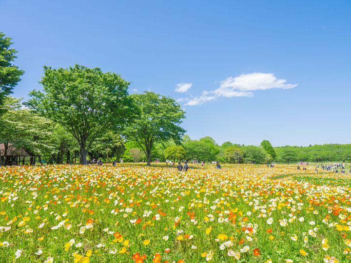 """GWは公園に行こう!東京都内の""""ピクニックで行きたい""""公園7選"""