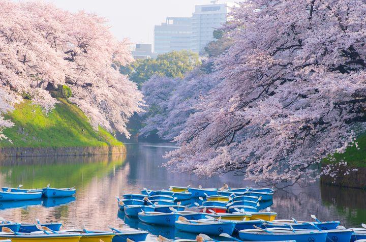【2019年】あっという間に春が来た!東京都内のお花見・夜桜スポット20選