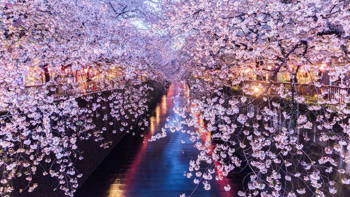 春の王道お花見スポットはここ!関東地方の人気「桜の名所」総まとめ