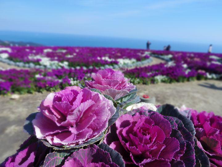 関西地方から日帰りで行ける!淡路島の魅力をご紹介