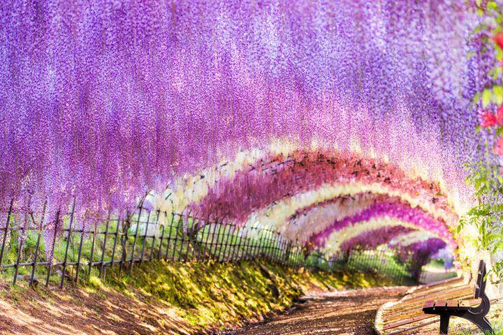 おでかけにぴったりな季節!5月に見ることができる日本全国の絶景19選