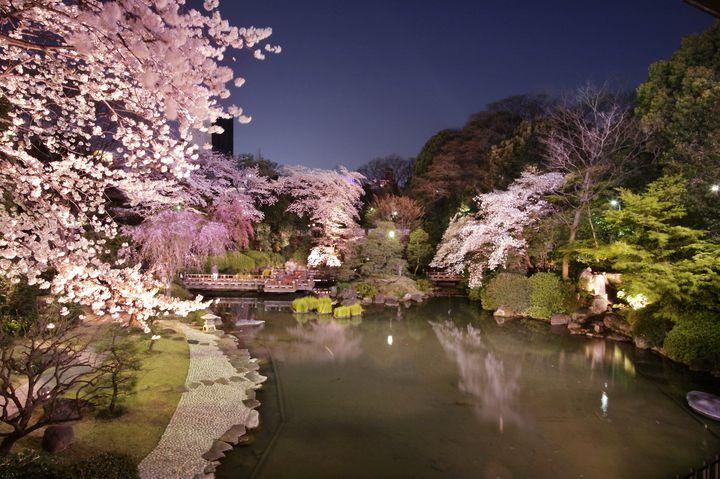 【終了】夜桜が美しい!「お花見レストラン」原宿東郷記念館にて期間限定OPEN