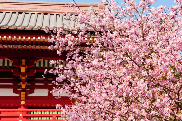 """デートにおでかけに!春の""""鎌倉""""で絶対行きたい定番おすすめスポット11選"""