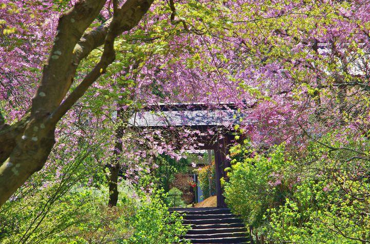 """デートにおでかけに!春の""""鎌倉""""で絶対行きたい定番おすすめスポット10選"""