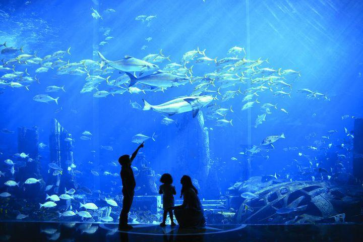 人生を変える絶景が待ってる!一度は行きたい世界の「水中ホテル」7選