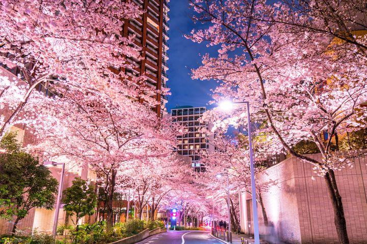 【開催中止】満開の桜で春を満喫!六本木「MIDTOWN BLOSSOM」開催