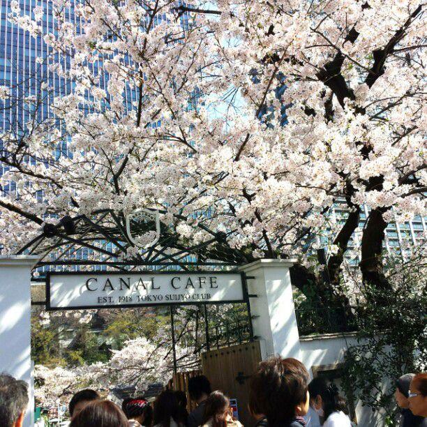 デートや女子会にも!ゆったりとお花見ができる東京都内のカフェ&レストラン7選
