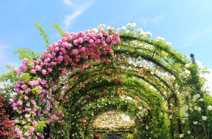 横浜でロマンチックな週末デートを!春のお花畑を楽しむおすすめのデートプラン