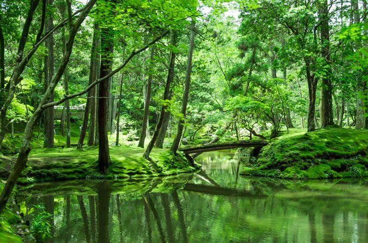 そうだ、京都行こう。はんなり、京都旅行で行きたい「京都のお寺&庭園」7選