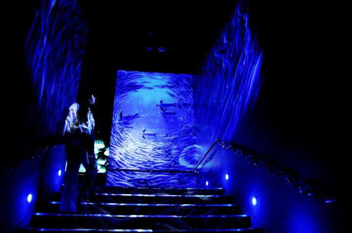 【終了】サンシャイン水族館にて「おさかなトンネル」&アルパカ・カピバラ展示開催