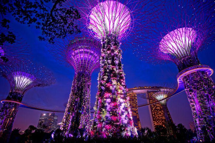 """シンガポール旅行の新名所!広大な植物園""""ガーデンズバイザベイ""""でしたい7つのこと"""