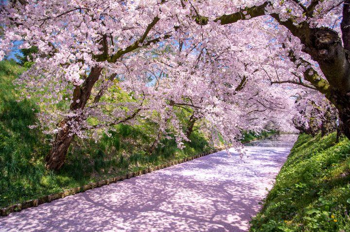 """春、それは旅したくなる季節。""""春のひとり旅""""におすすめ国内スポット20選"""