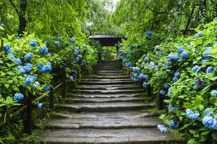 """あじさいを巡る初夏ならではの1日。私たちの""""よくばり鎌倉1日コース""""はこれだ"""