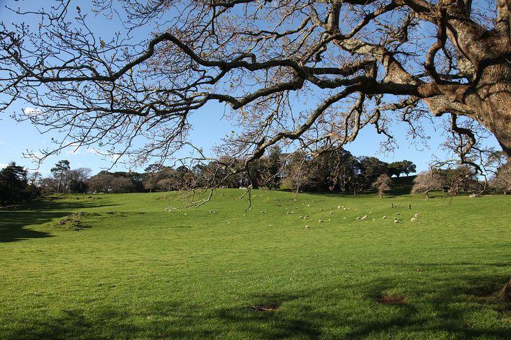 オークランドでも羊に逢える!「コーンウォール公園」のみどころ