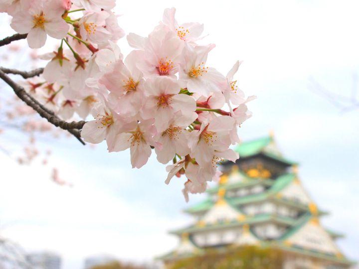 """桜やグルメにアートまで。この春行きたい""""関西地方の今週したいこと""""7選"""