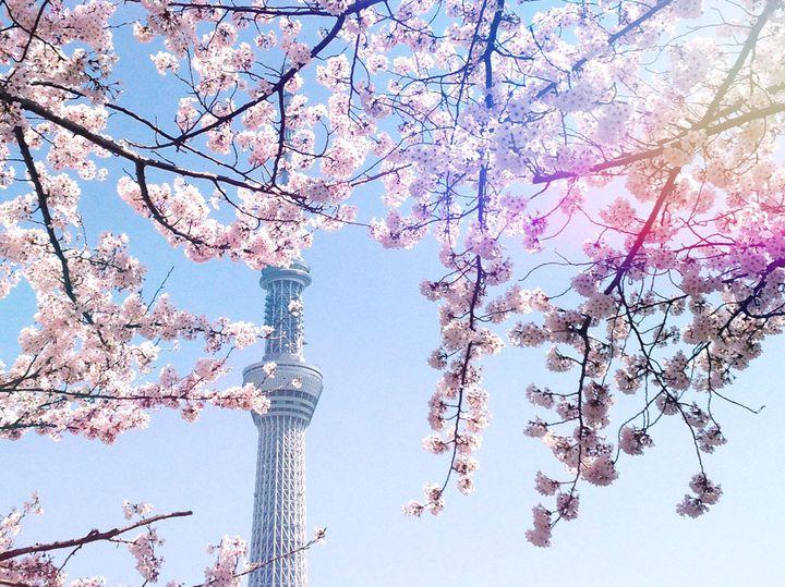 """歩いて春を感じよう。春のおでかけにおすすめな""""東京お散歩コース""""7選"""