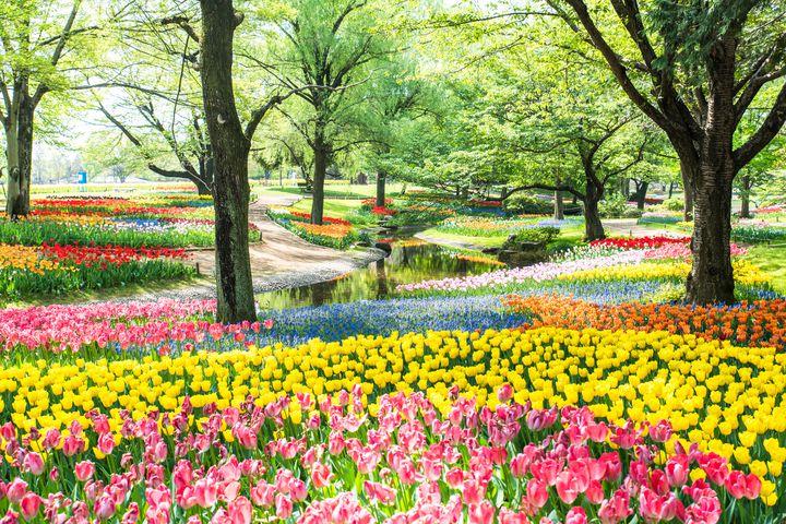 そうだ、ピクニックにいこう!関東でおすすめの人気ピクニックスポット17選