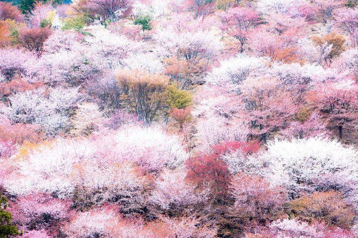 """日本の絶景、イロトリドリ。美しすぎる""""色別絶景スポット""""総まとめ"""