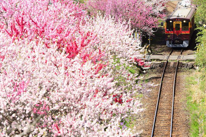 """ずっと寄り添っていたい。恋人との""""列車旅""""で乗りたい日本の鉄道路線9選"""
