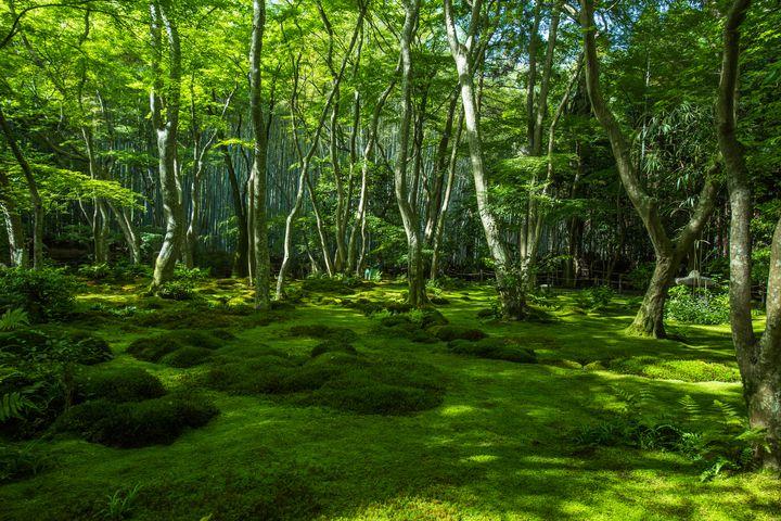 """一面の緑に包まれたい!関西にある""""緑溢れる""""お出かけスポット7選"""