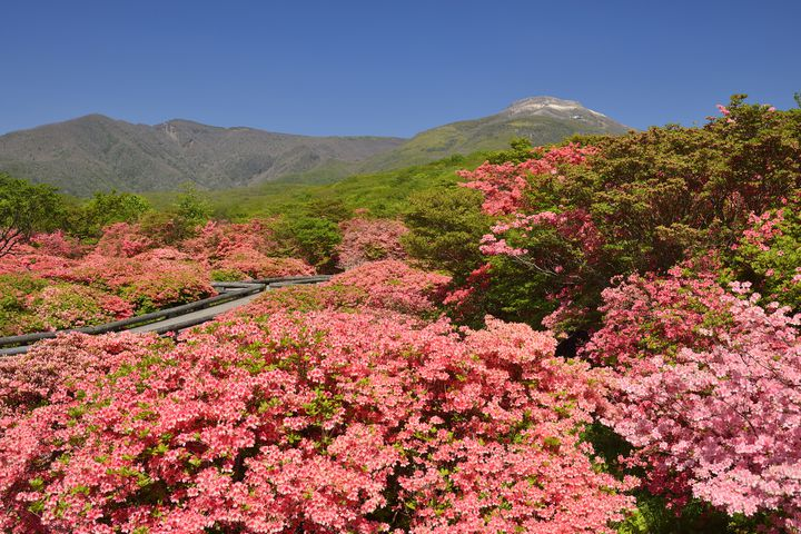 那須高原は見どころ満載のリゾートエリア。オススメ観光スポット10選!