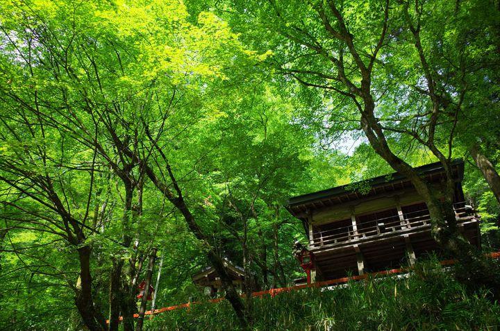 全部タダで見れるんです!京都の「無料フォトジェニックスポット」7選