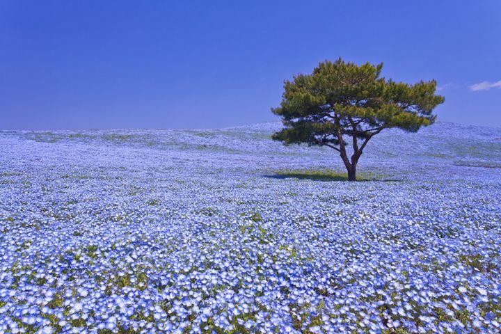 ずっとお花に囲まれて過ごしたい。関東のフラワースポット春夏秋冬12選