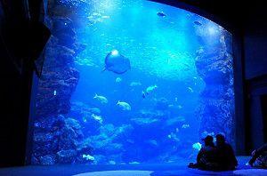 【終了】午後8時まで延長営業!GWの京都水族館で「夜のすいぞくかん」開催