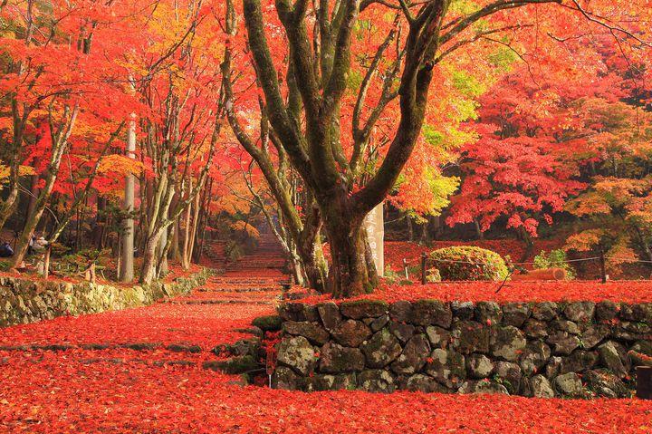 絵画のような絶景を望むならココ!紅葉の5大定番エリアと今年注目スポットをご紹介