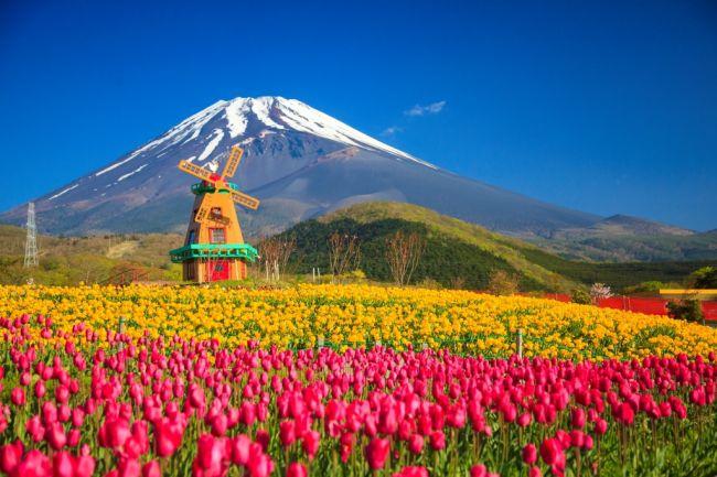 【終了】21万本が咲き誇る!「富士山の裾野 天空のチューリップ祭り 2017」開催