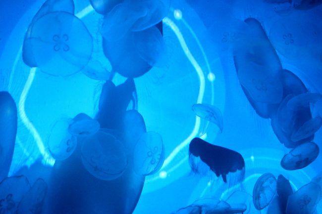 未体験の浮遊感!すみだ水族館に体感型クラゲ展示「ワンダークラゲ」登場