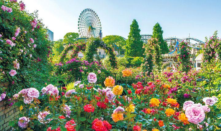 【終了】600種のバラを眺めよう!「ローズフェスティバル」大阪ひらかたパークで開催