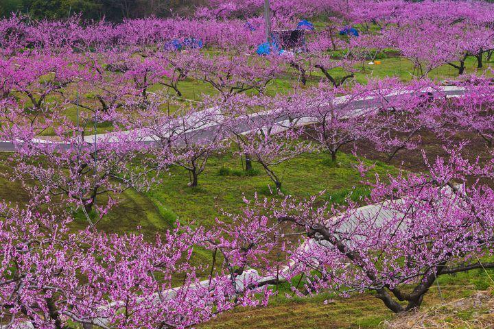 春は桃源郷の世界・秋はフルーツ狩り!南アルプスの楽しみ方20選