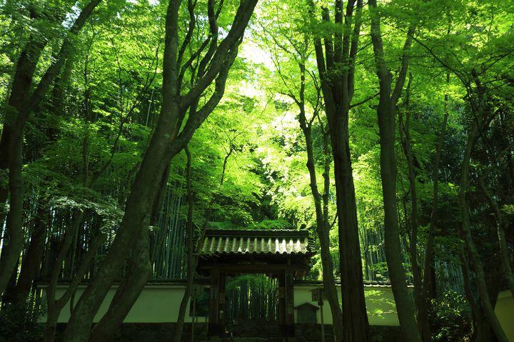静寂と緑があなたを包む。京都にある「地蔵院」で心から癒されて
