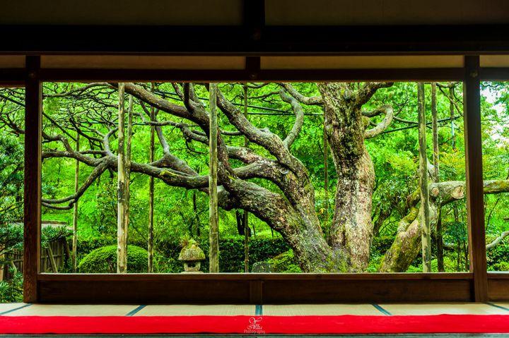 美しい日本庭園と美味しいお抹茶。京都でゆるりとお抹茶がいただけるお寺10選。