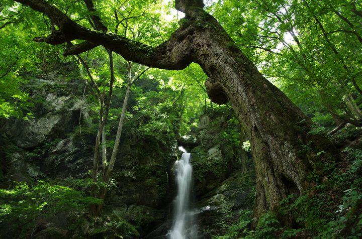 そこにあるのは、神秘か、奇跡か。五感揺さぶる秩父「不動滝」の揺るがぬ魅力とは