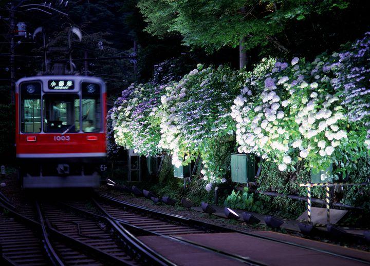 【終了】梅雨ならではの幻想空間!箱根登山電車「夜のあじさい号」運行決定