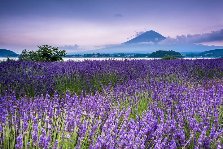 その景色に心奪われる。死ぬまでに見たい日本の美しき「花の絶景」8選