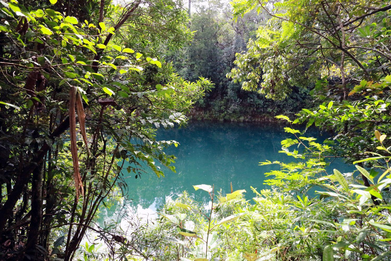 園名の「リビエール・ブルー」は、フランス語で「青い川」の意味なのですが、実は園内には「白い川」もあるんです。園内では他にも、樹齢1000年を超えるという「グラン・カオリ(カオリの樹)」など、太古の時代の名残を感じさせる存在との出会いもあります。
