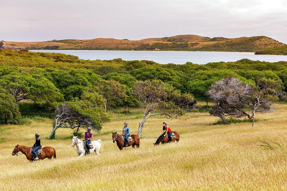 ニアウリ林や小高い山などをのんびりといく乗馬ツアーもあり、人気を博しています。ブーライユは、すぐ近くに世界遺産登録されたラグーンもあり、ジュゴンやウミガメなどに出会える可能性もあるとあって、今、大注目の行き先の一つでもあるんです。