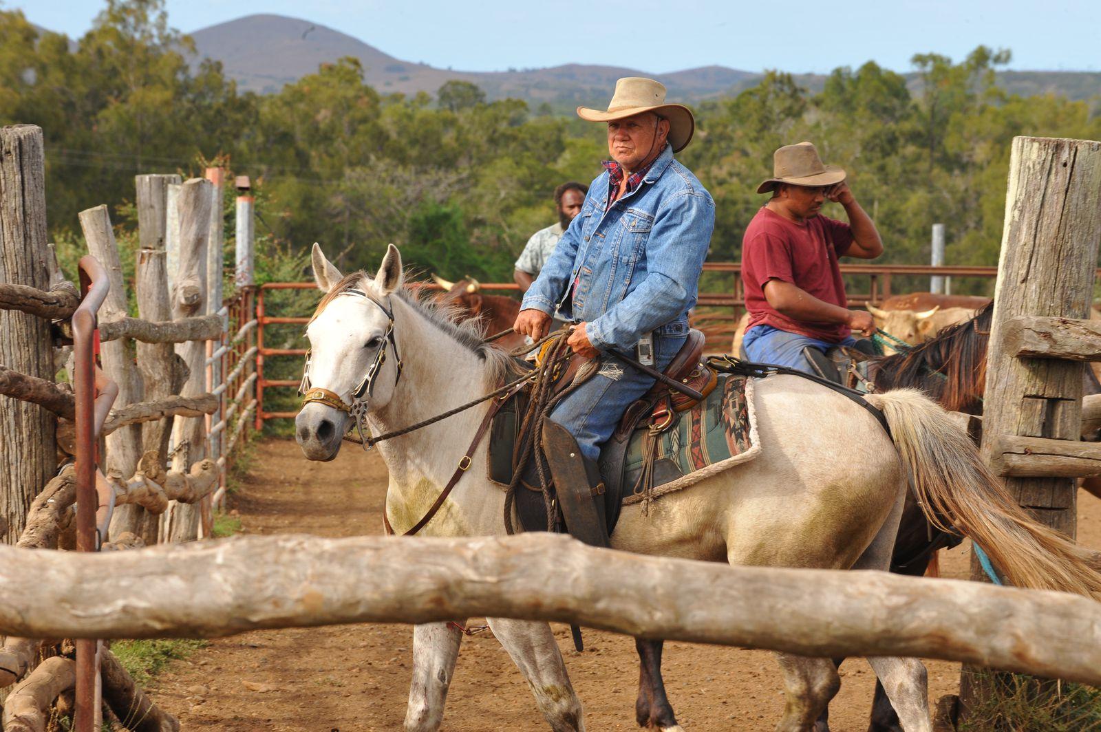 最後にご紹介するのは、現地の言葉では「ストックマン」と呼ばれる「カウボーイ」と共に行く「乗馬ツアー」。本島中部に位置する「ブーライユ」はニューカレドニア第2の都市で、19世紀に開拓者の子孫たちが繁栄させた牧畜と農業が今も産業として息づいています。緑豊かな谷間には、大規模農場やストックマンが牛追いをする広大な牧場が点在。