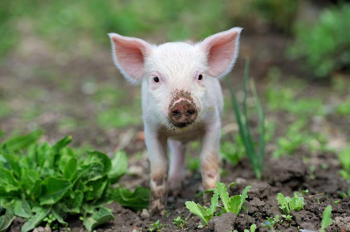 穴場日帰りお出かけスポット!埼玉にあるこだわりの豚の宝庫「サイボクハム」とは